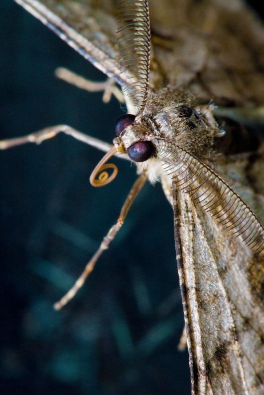 Moth, London