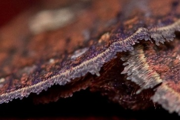 Wings of unidentified moth