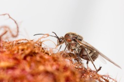 Galls and Gall Wasps