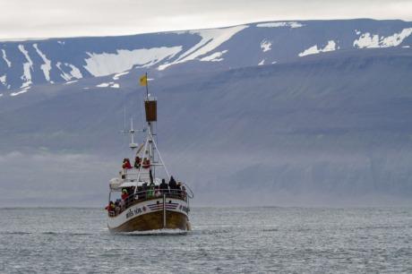 Whale watching tour, Húsavík.